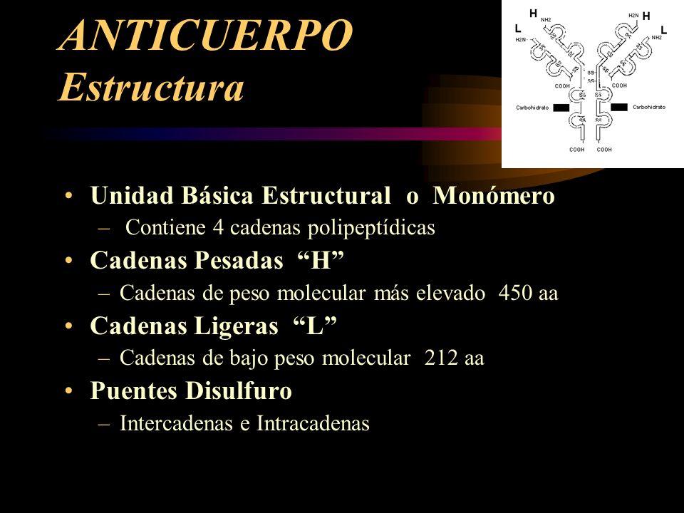 ANTICUERPO Estructura