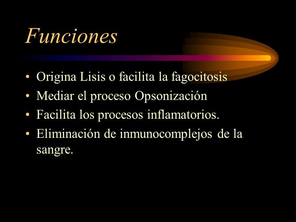 Funciones Origina Lisis o facilita la fagocitosis