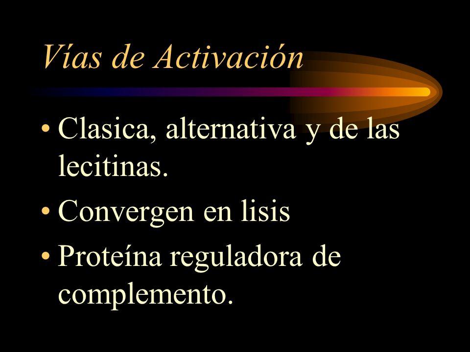 Vías de Activación Clasica, alternativa y de las lecitinas.