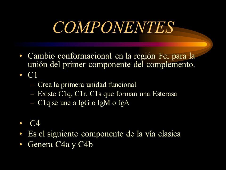 COMPONENTES Cambio conformacional en la región Fc, para la unión del primer componente del complemento.