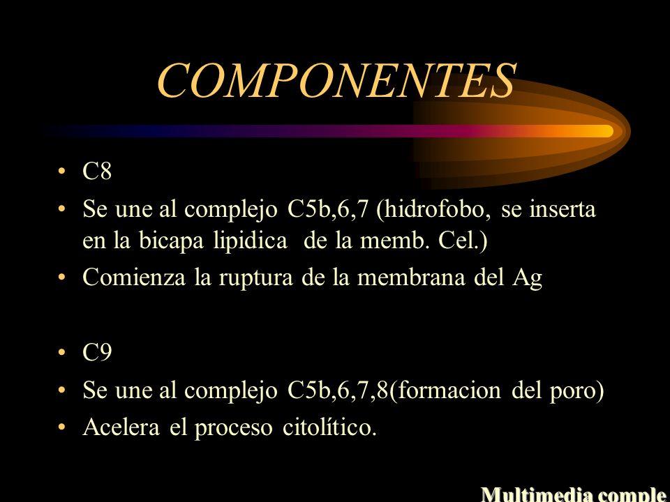 COMPONENTES C8. Se une al complejo C5b,6,7 (hidrofobo, se inserta en la bicapa lipidica de la memb. Cel.)