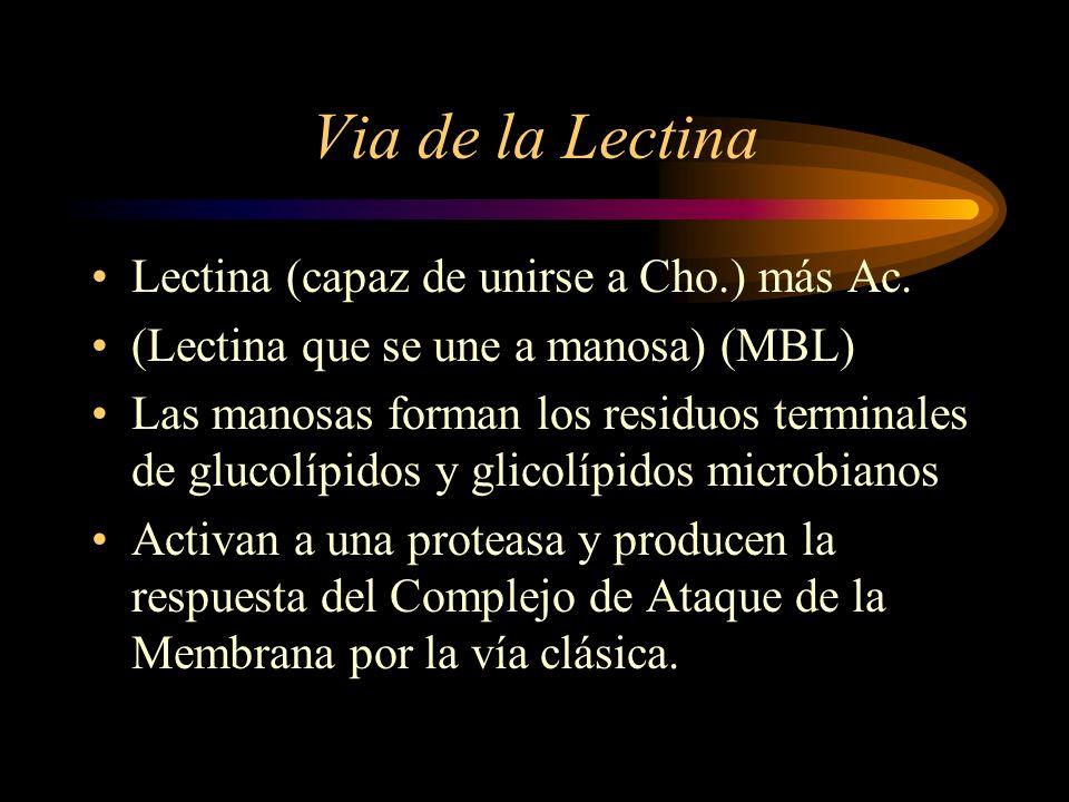 Via de la Lectina Lectina (capaz de unirse a Cho.) más Ac.
