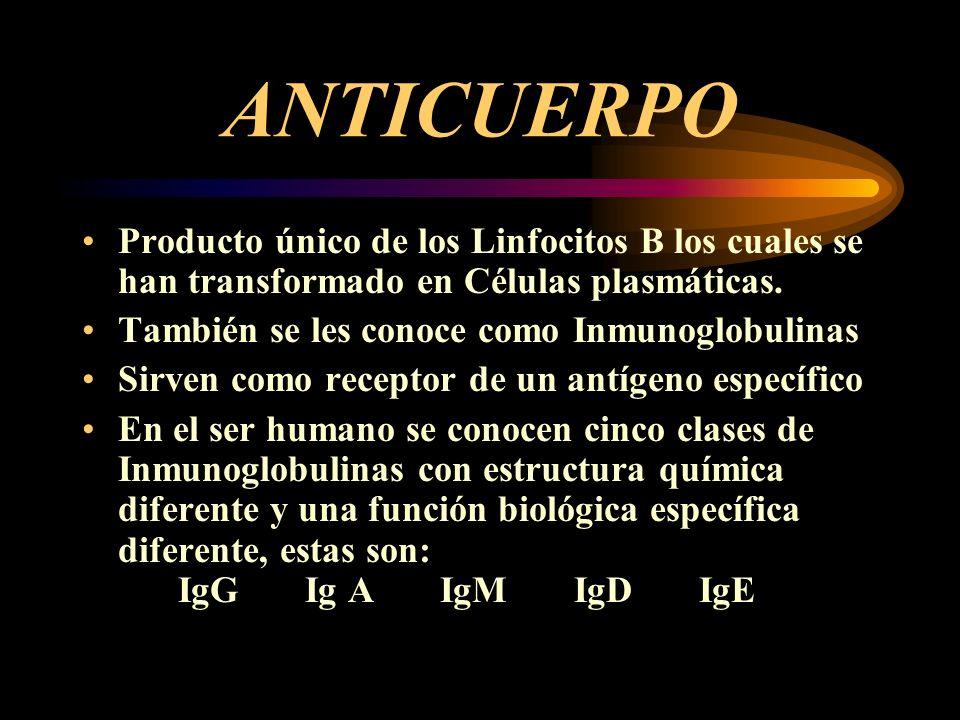 ANTICUERPO Producto único de los Linfocitos B los cuales se han transformado en Células plasmáticas.