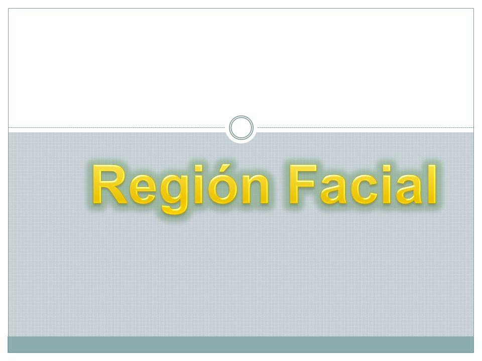 Región Facial