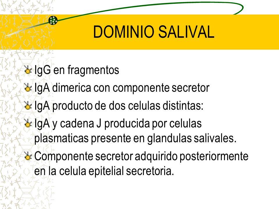 DOMINIO SALIVAL IgG en fragmentos IgA dimerica con componente secretor