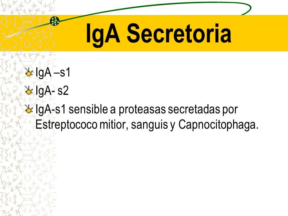 IgA Secretoria IgA –s1 IgA- s2