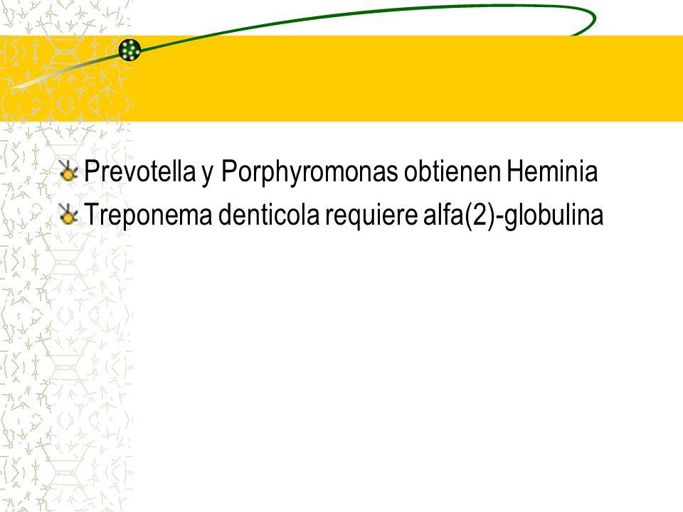 Prevotella y Porphyromonas obtienen Heminia
