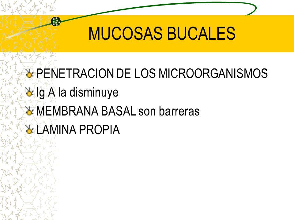 MUCOSAS BUCALES PENETRACION DE LOS MICROORGANISMOS Ig A la disminuye