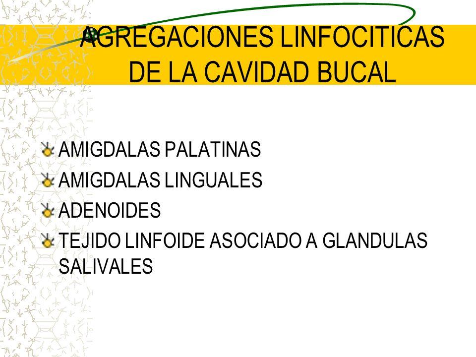 AGREGACIONES LINFOCITICAS DE LA CAVIDAD BUCAL