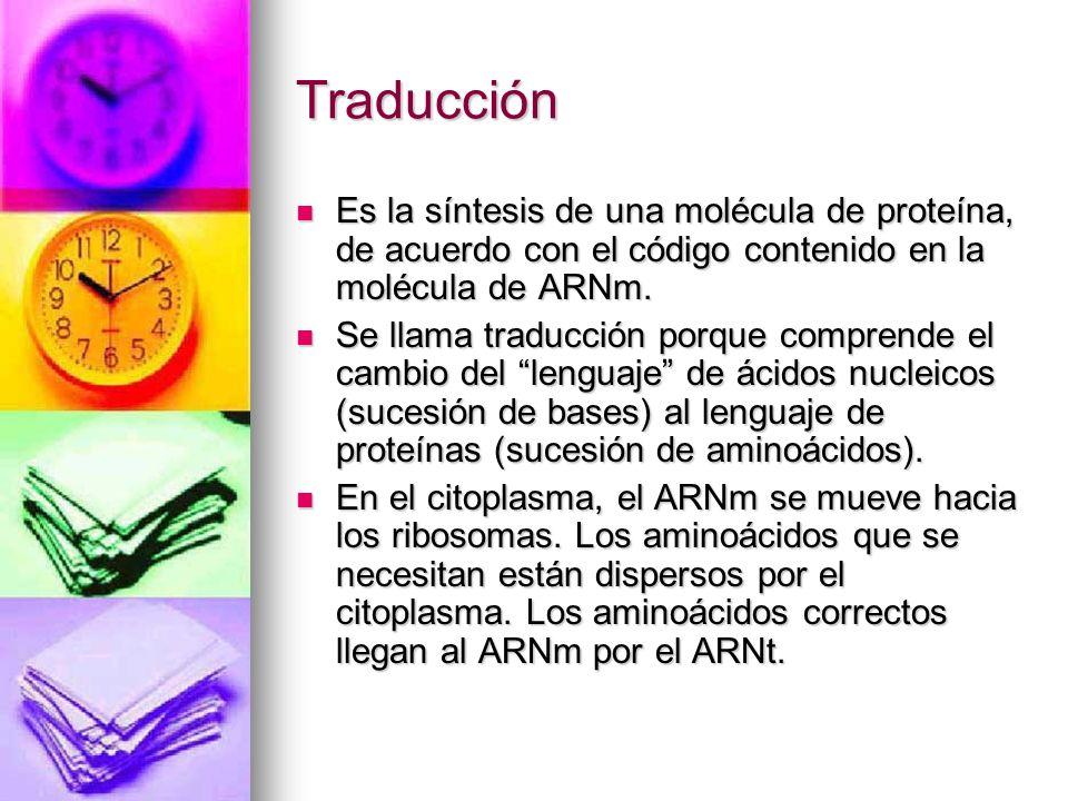Traducción Es la síntesis de una molécula de proteína, de acuerdo con el código contenido en la molécula de ARNm.