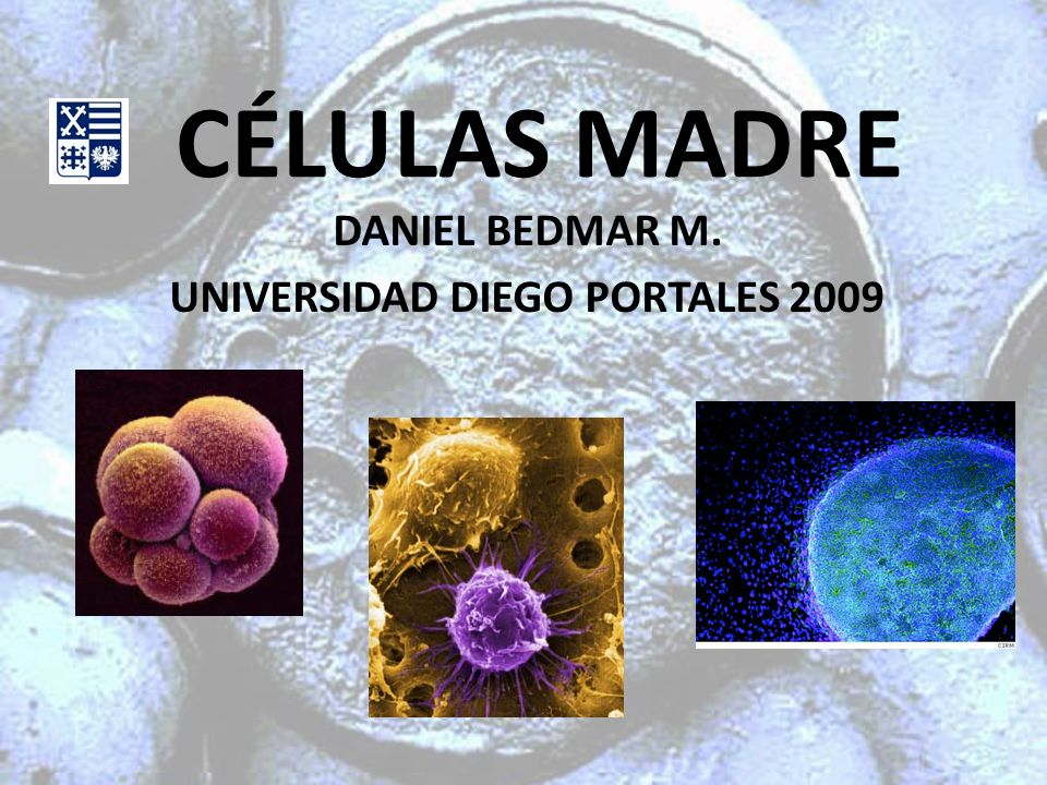 DANIEL BEDMAR M. UNIVERSIDAD DIEGO PORTALES 2009