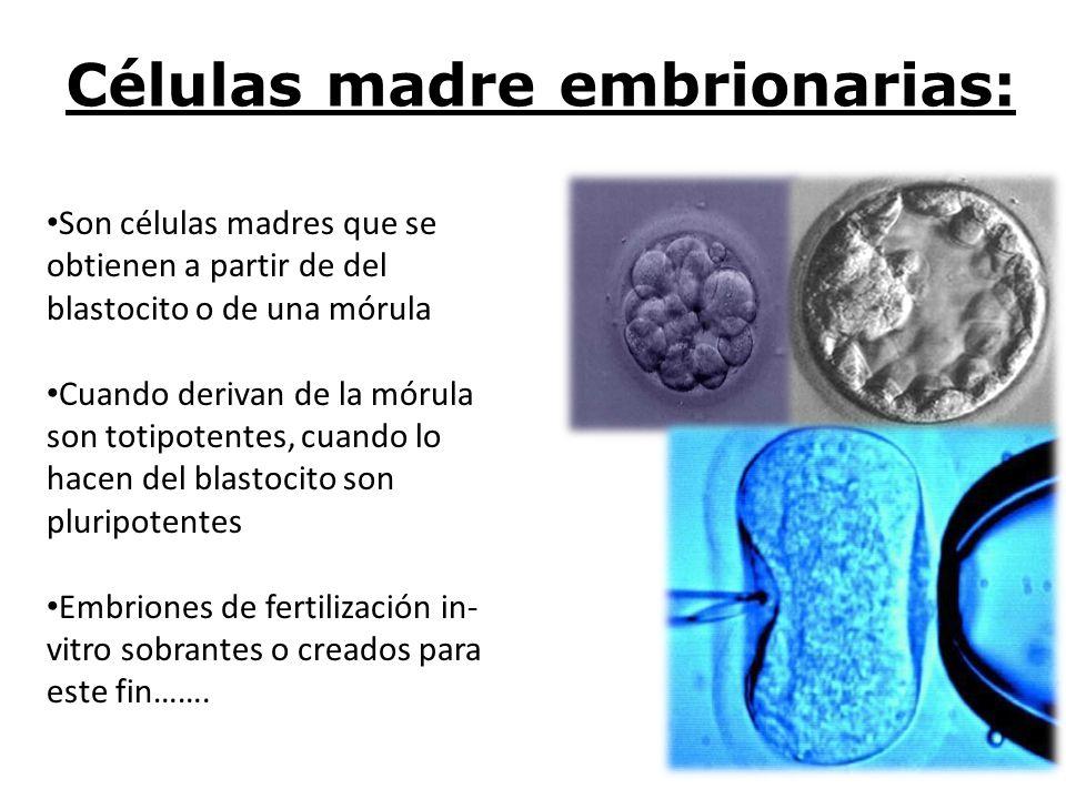 Células madre embrionarias: