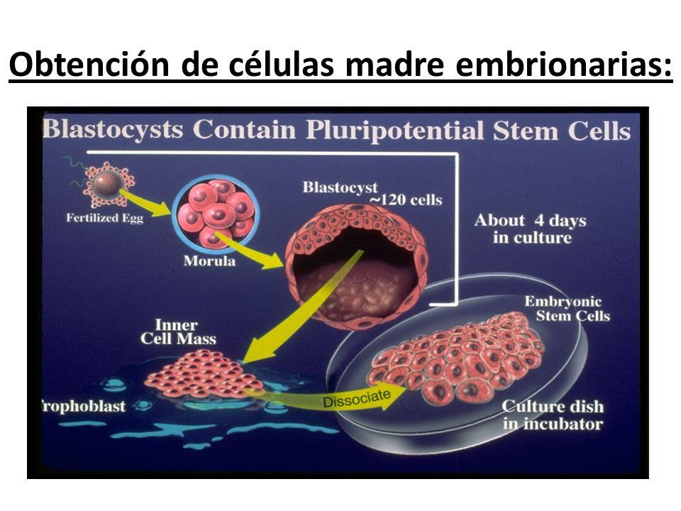 Obtención de células madre embrionarias: