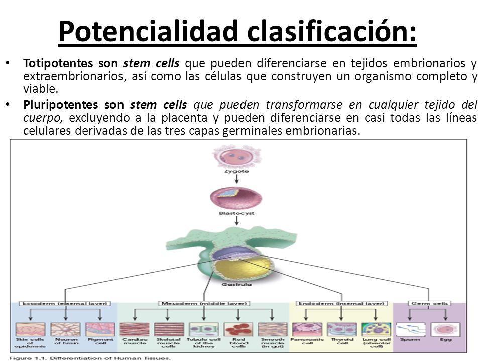 Potencialidad clasificación: