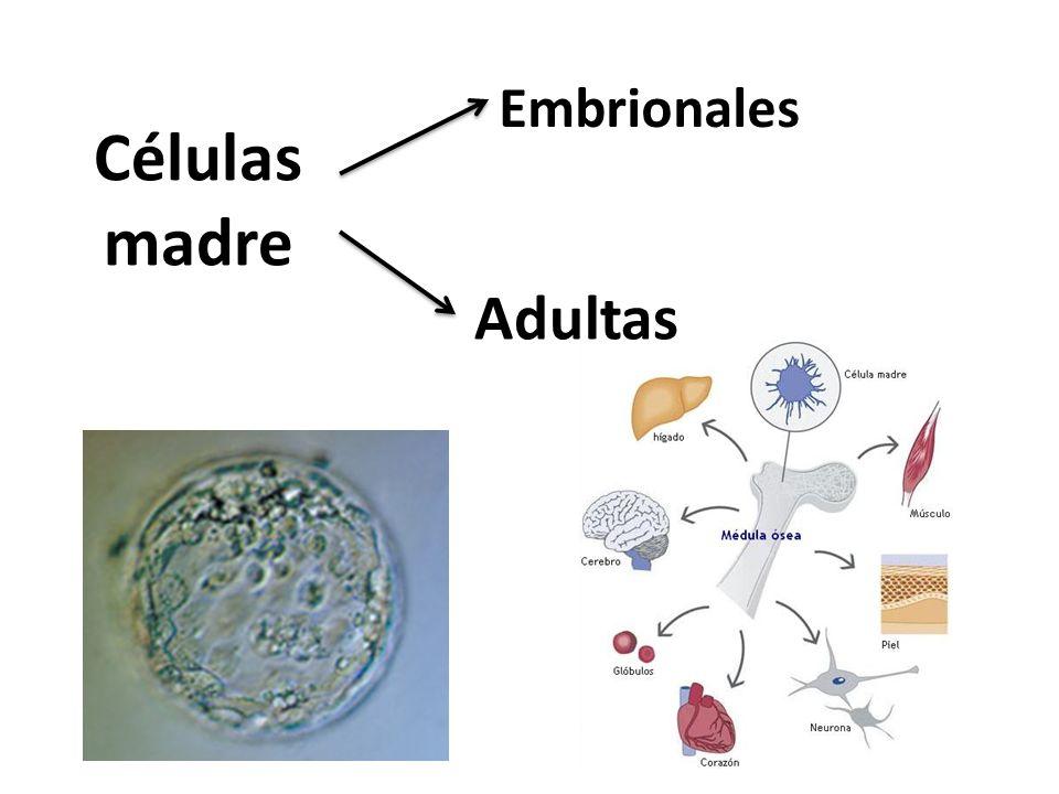 Embrionales Células madre Adultas