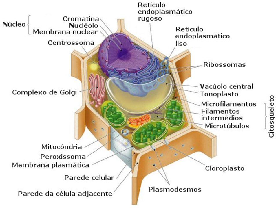 CITOGENÉTICA Ciencia biológica que se encarga del estudio de cromosomas, según la especie.