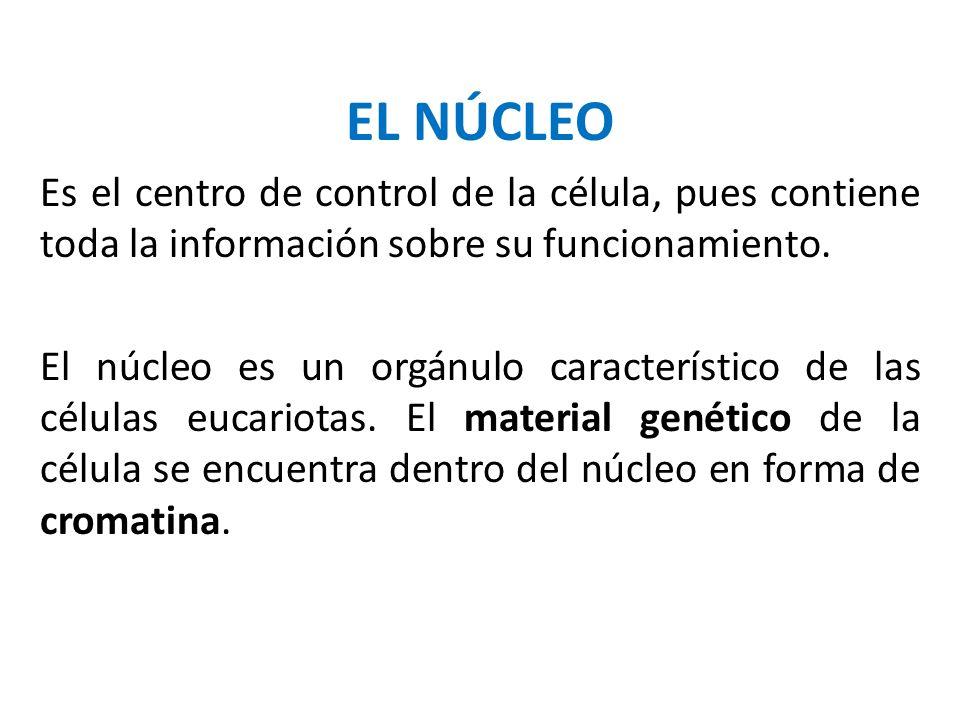 EL NÚCLEO Es el centro de control de la célula, pues contiene toda la información sobre su funcionamiento.