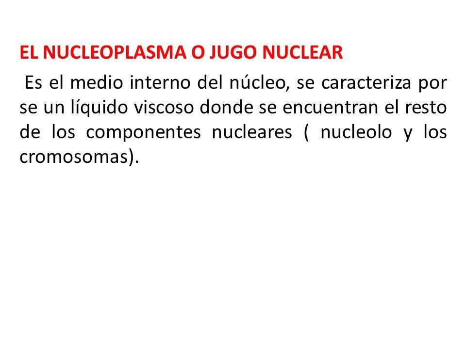 EL NUCLEOPLASMA O JUGO NUCLEAR