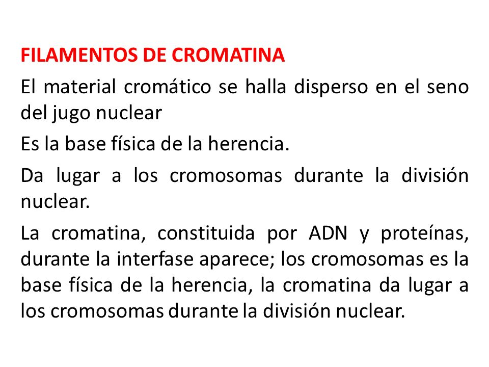 FILAMENTOS DE CROMATINA