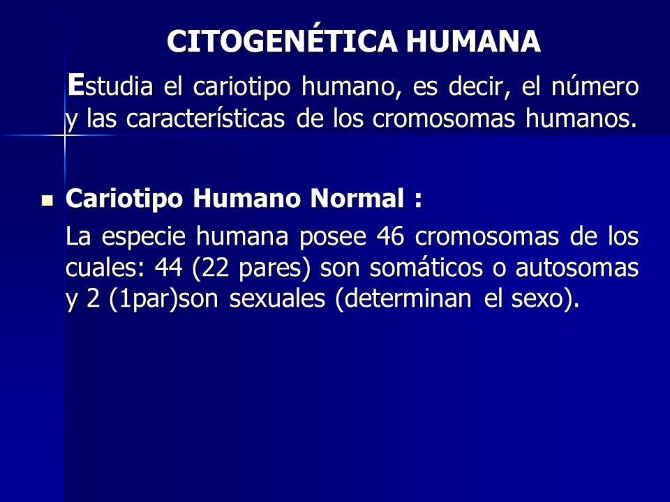 CITOGENÉTICA HUMANA Estudia el cariotipo humano, es decir, el número y las características de los cromosomas humanos.