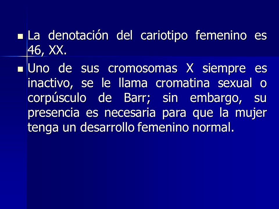 La denotación del cariotipo femenino es 46, XX.