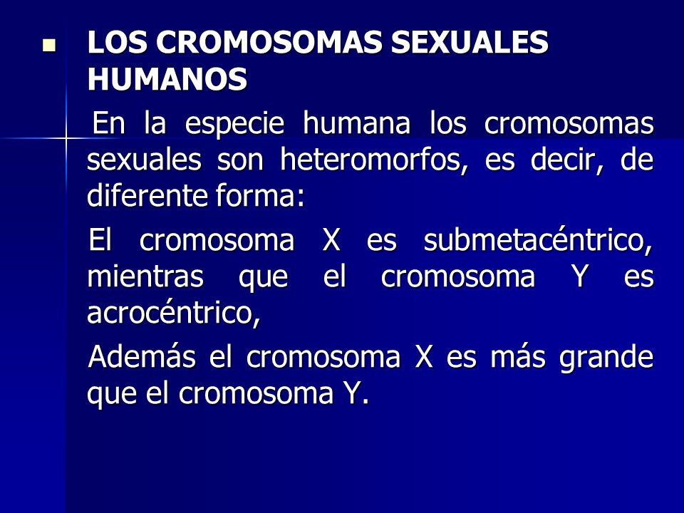 LOS CROMOSOMAS SEXUALES HUMANOS