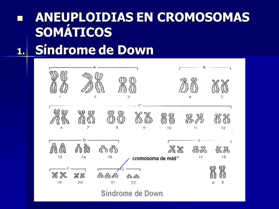 ANEUPLOIDIAS EN CROMOSOMAS SOMÁTICOS