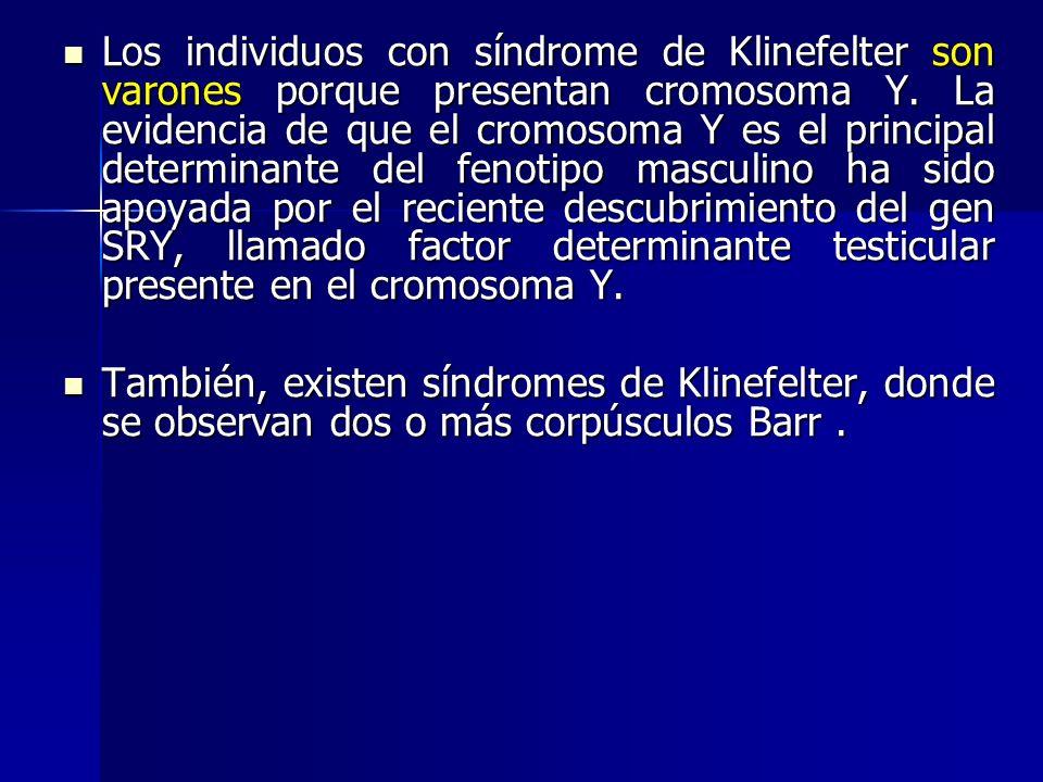 Los individuos con síndrome de Klinefelter son varones porque presentan cromosoma Y. La evidencia de que el cromosoma Y es el principal determinante del fenotipo masculino ha sido apoyada por el reciente descubrimiento del gen SRY, llamado factor determinante testicular presente en el cromosoma Y.