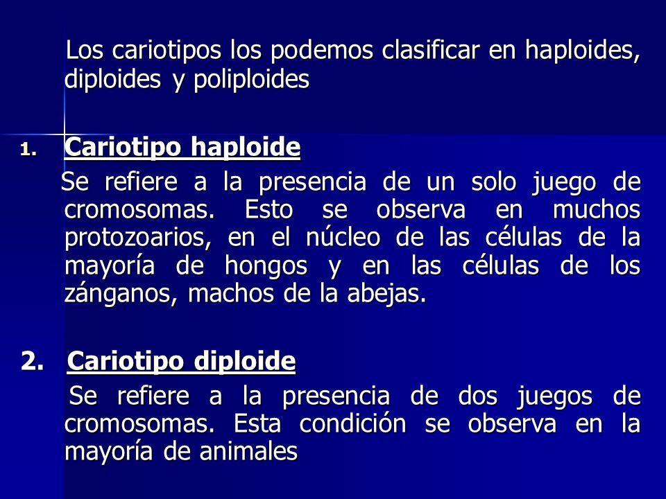 Los cariotipos los podemos clasificar en haploides, diploides y poliploides