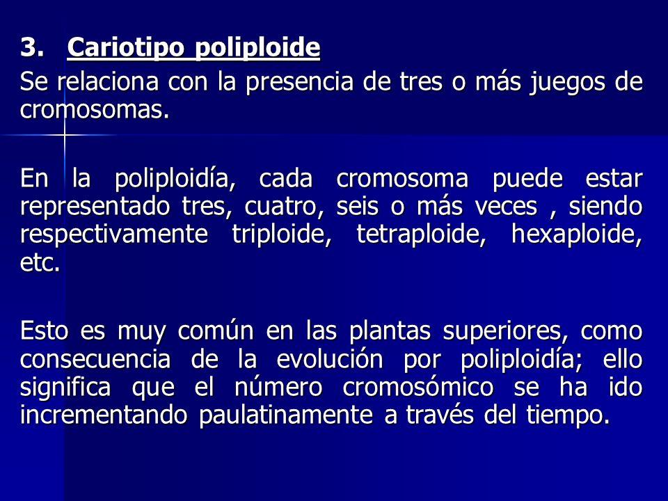 3. Cariotipo poliploide Se relaciona con la presencia de tres o más juegos de cromosomas.