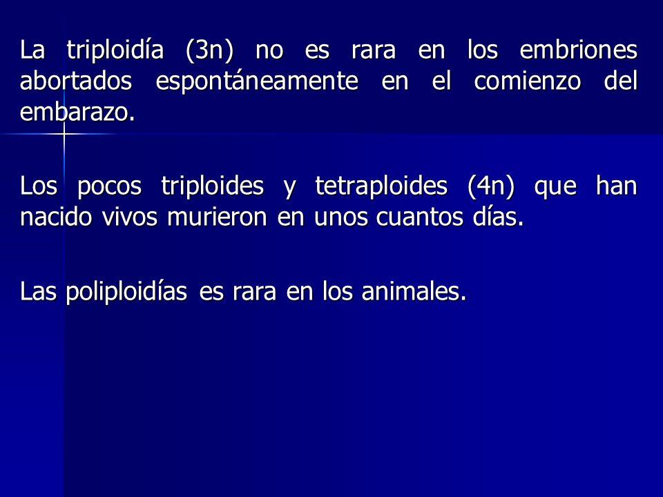 La triploidía (3n) no es rara en los embriones abortados espontáneamente en el comienzo del embarazo.