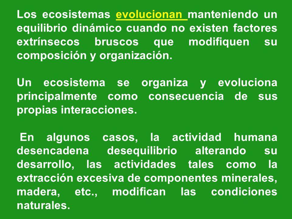 Los ecosistemas evolucionan manteniendo un equilibrio dinámico cuando no existen factores extrínsecos bruscos que modifiquen su composición y organización.