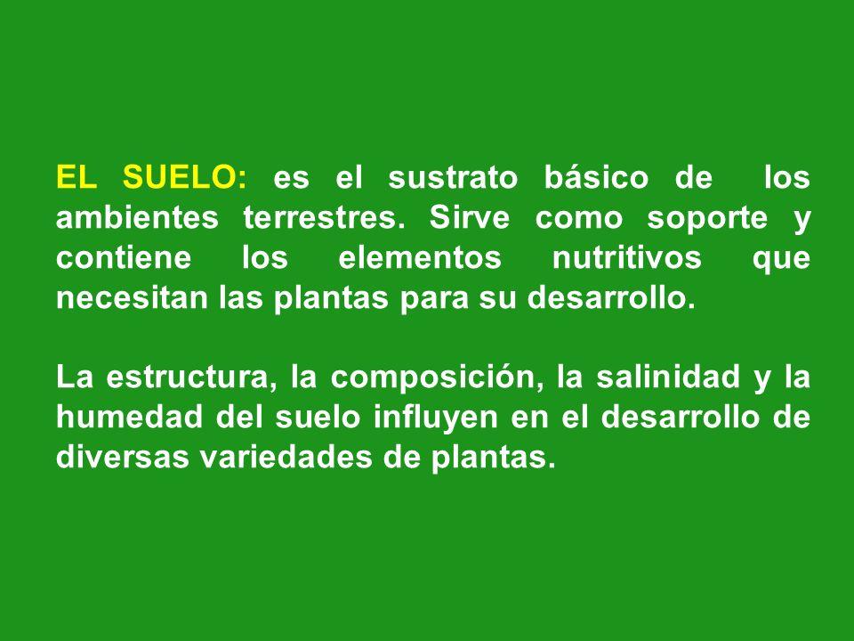 EL SUELO: es el sustrato básico de los ambientes terrestres
