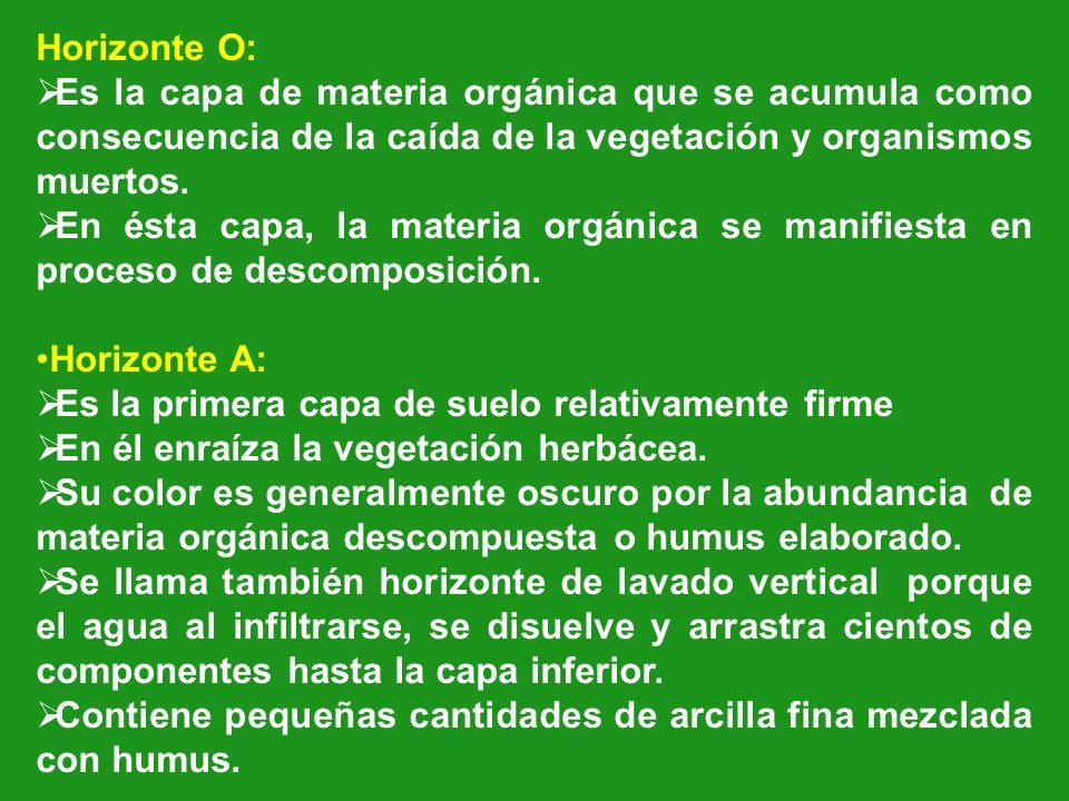 Horizonte O: Es la capa de materia orgánica que se acumula como consecuencia de la caída de la vegetación y organismos muertos.