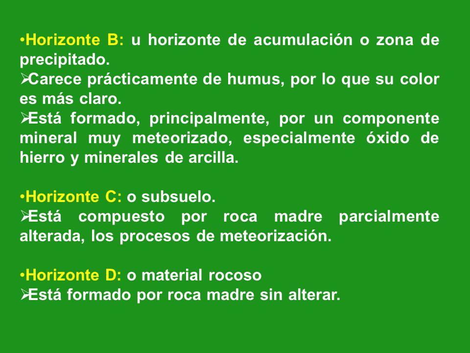 Horizonte B: u horizonte de acumulación o zona de precipitado.