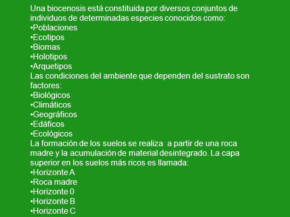 Una biocenosis está constituida por diversos conjuntos de individuos de determinadas especies conocidos como: