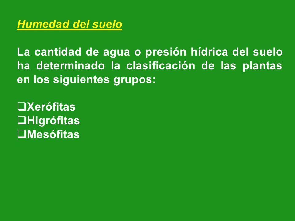 Humedad del suelo La cantidad de agua o presión hídrica del suelo ha determinado la clasificación de las plantas en los siguientes grupos: