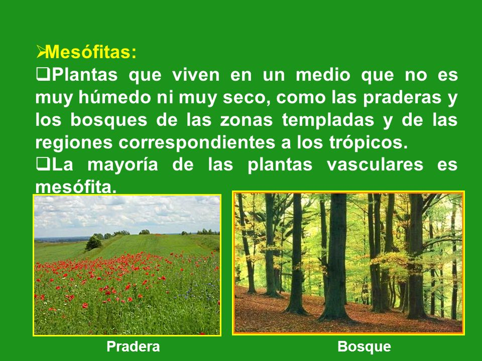 La mayoría de las plantas vasculares es mesófita.