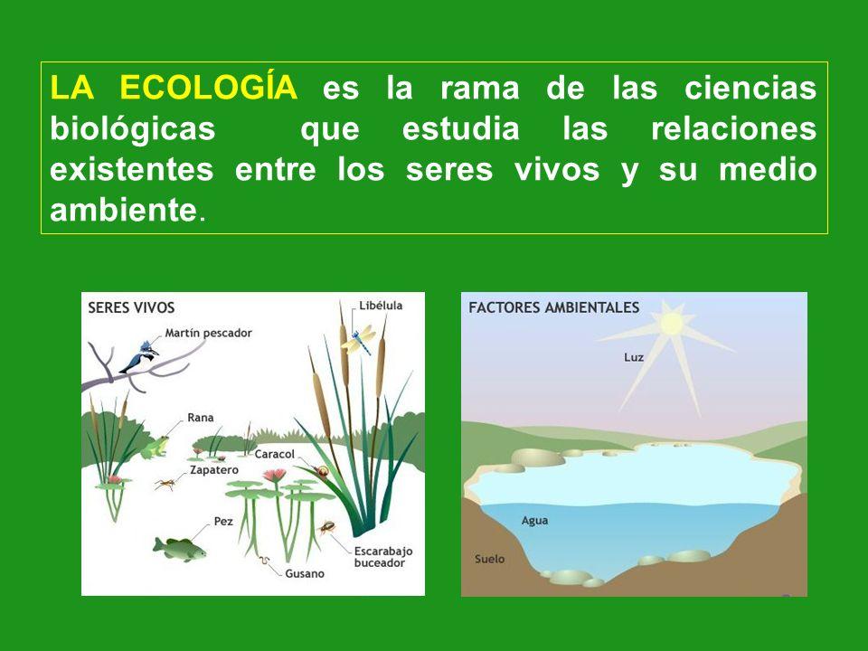 LA ECOLOGÍA es la rama de las ciencias biológicas que estudia las relaciones existentes entre los seres vivos y su medio ambiente.