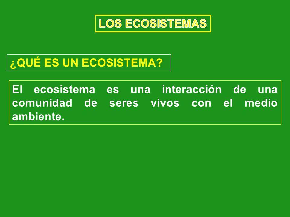 LOS ECOSISTEMAS ¿QUÉ ES UN ECOSISTEMA.
