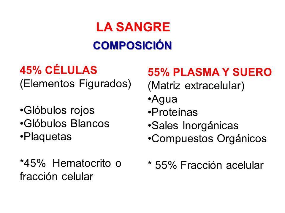 LA SANGRE COMPOSICIÓN 45% CÉLULAS 55% PLASMA Y SUERO