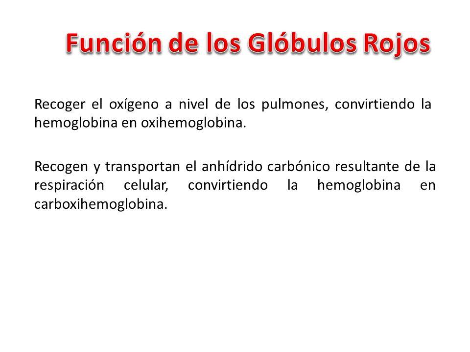 Función de los Glóbulos Rojos