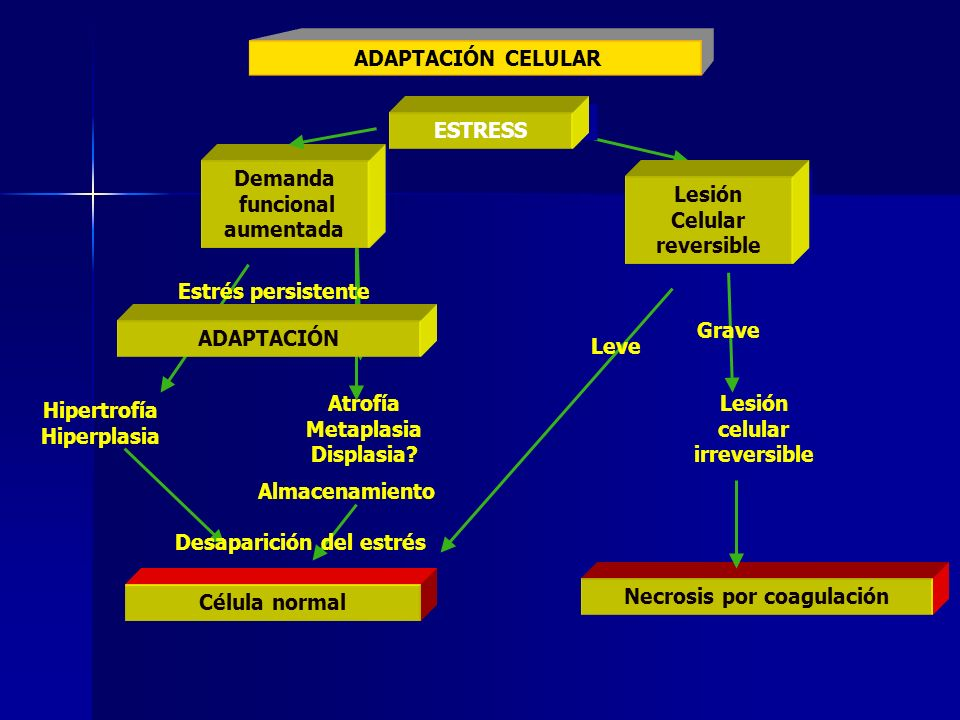 Lesión celular irreversible Hipertrofía Hiperplasia