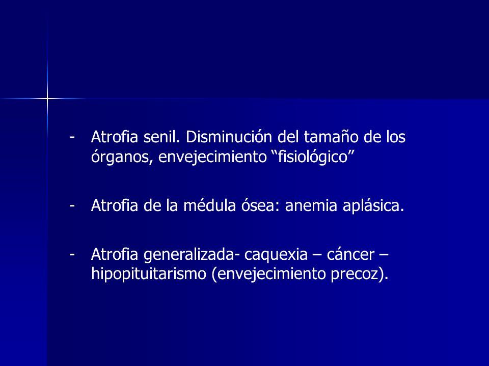 Atrofia senil. Disminución del tamaño de los órganos, envejecimiento fisiológico