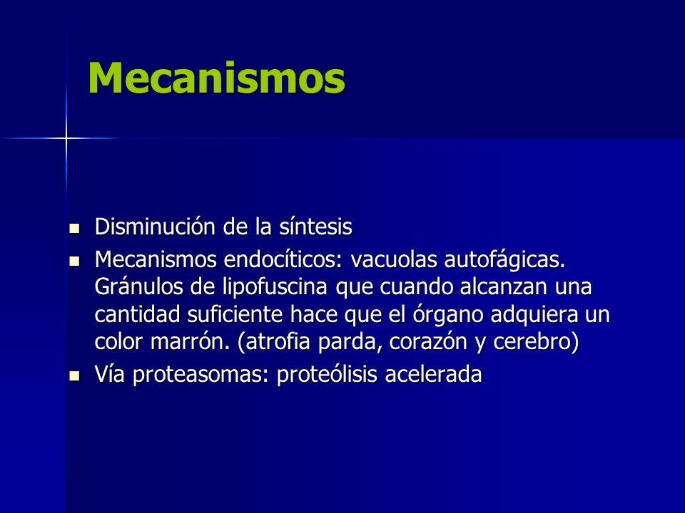Mecanismos Disminución de la síntesis