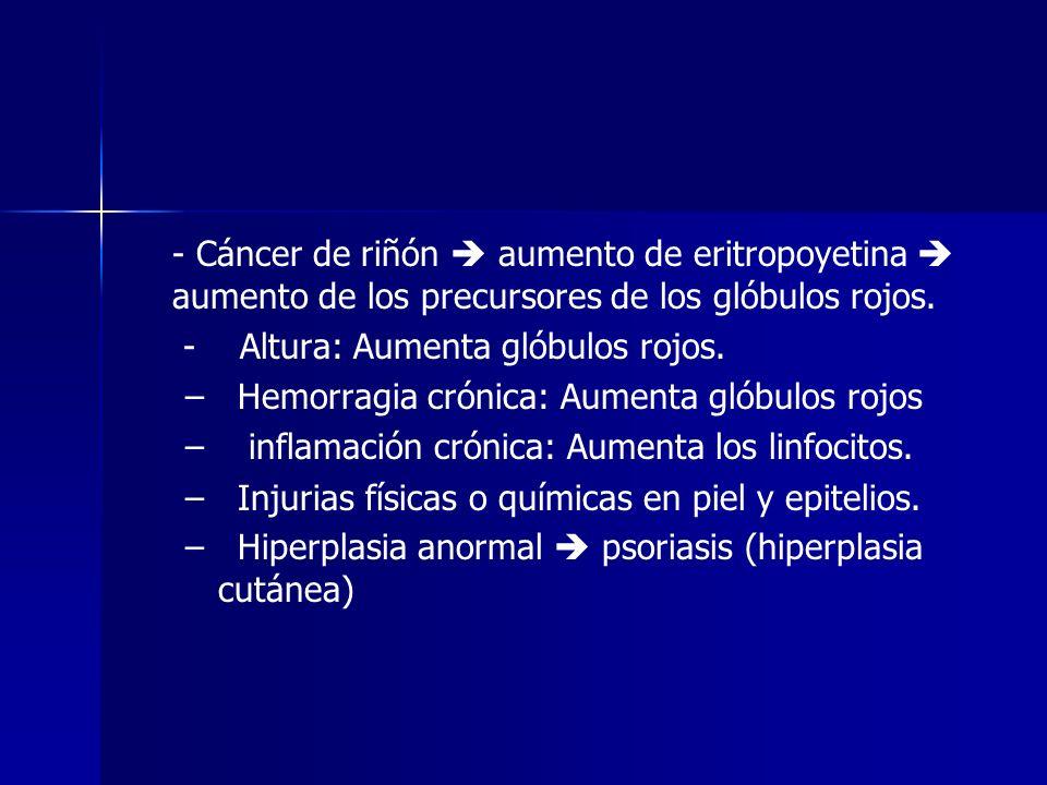 - Cáncer de riñón  aumento de eritropoyetina  aumento de los precursores de los glóbulos rojos.