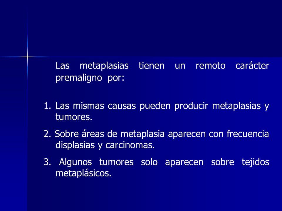 Las metaplasias tienen un remoto carácter premaligno por: