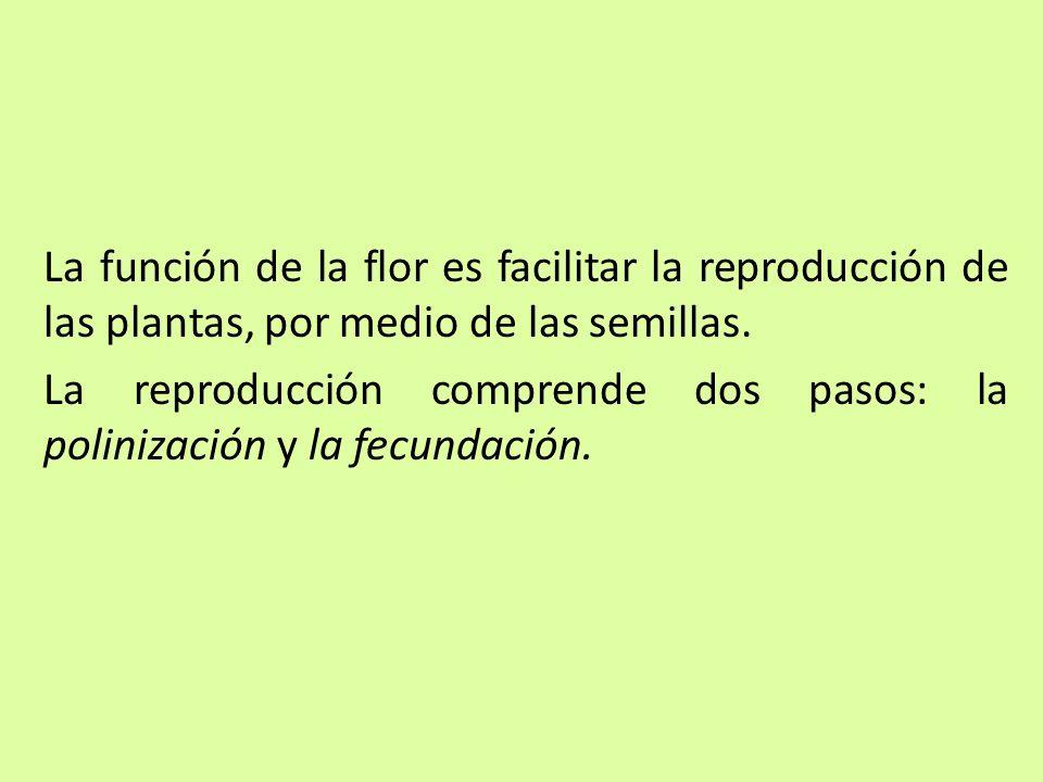 La función de la flor es facilitar la reproducción de las plantas, por medio de las semillas.