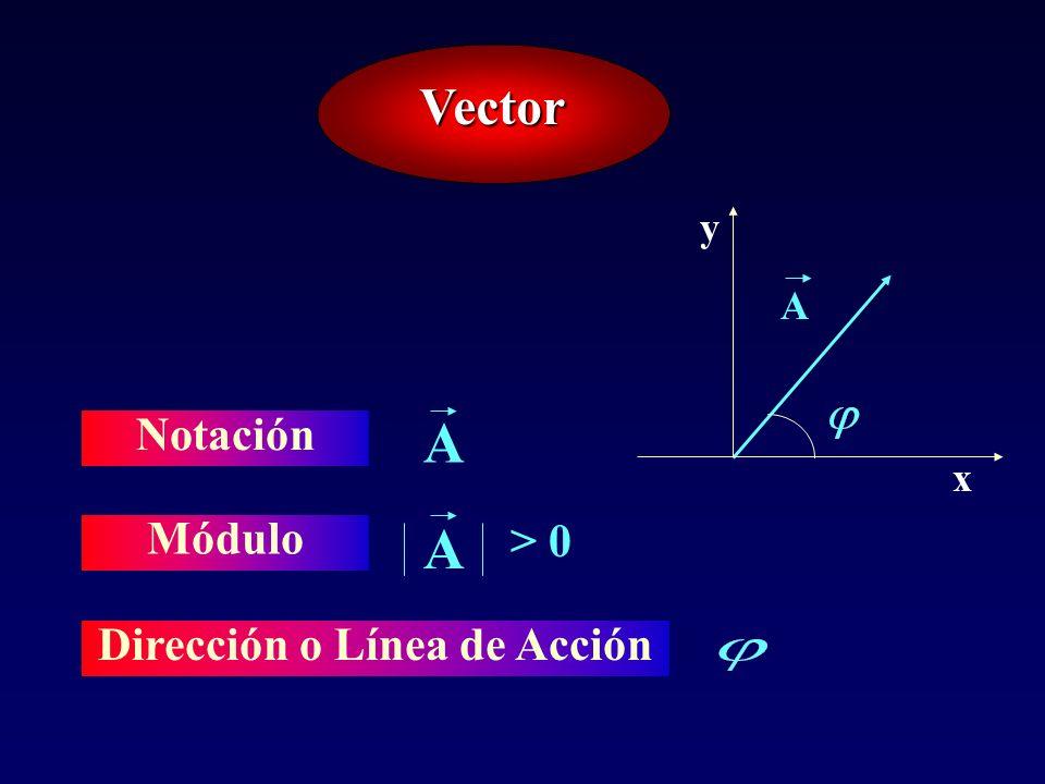 Dirección o Línea de Acción