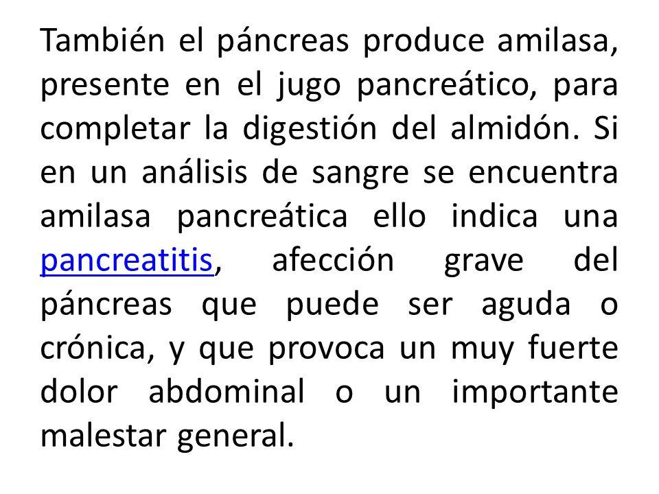 También el páncreas produce amilasa, presente en el jugo pancreático, para completar la digestión del almidón.